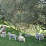 10月生まれの子羊と天使ちゃん