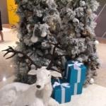 少し気の早いクリスマスツリー