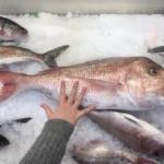 NZのお魚売り場